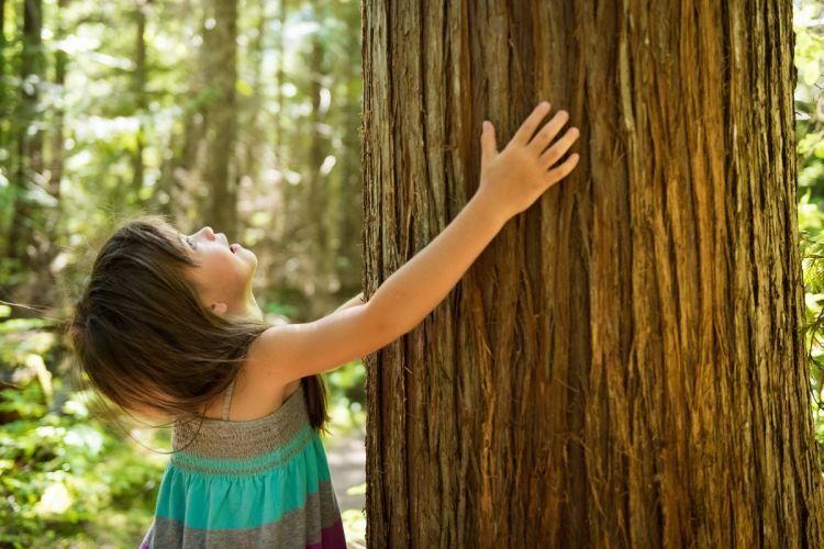 Kid hugging tree